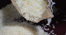 grãos-arroz