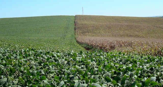 Resultado de imagem para Agricultura regenerativa é nova arma contra mudança climática