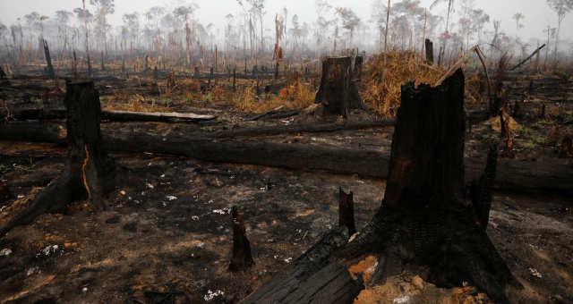 Resultado de imagem para amazonia