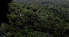 Floresta Amazônia Meio Ambiente
