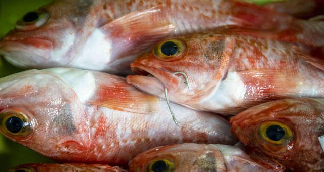 Peixes-agronegócio