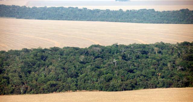 Áreas de floresta amazônica e de cultivo de soja em Mato Grosso