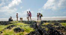 Nordeste Mancha Poluição Meio Ambiente Brasil