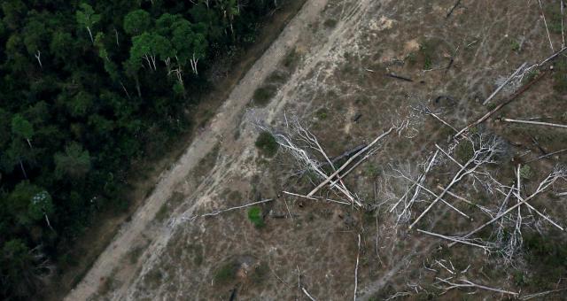 Amazônia Meio Ambiente Desmatamento