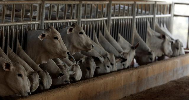 Gado Boi Carnes