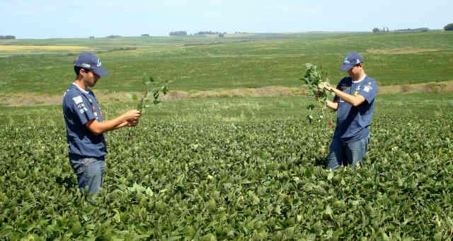 Agrônomos checam plantio de soja em Cruz Alta (RS)