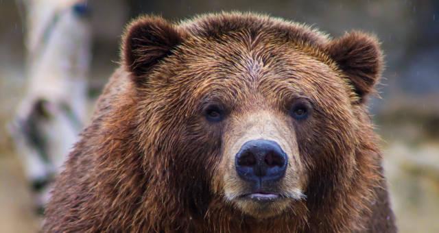 Urso Bear Market