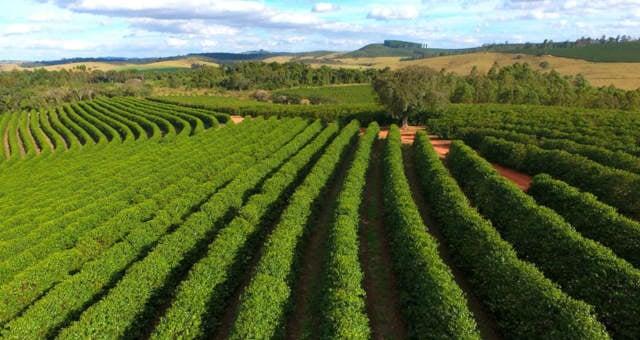 Cooxupé Café Cafeicultura Agricultura Agronegócio