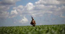 Índios Agricultura Agronegócio