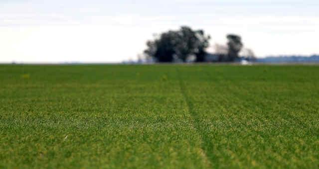 Campos de trigo em fazenda próxima de Azul, Argentina