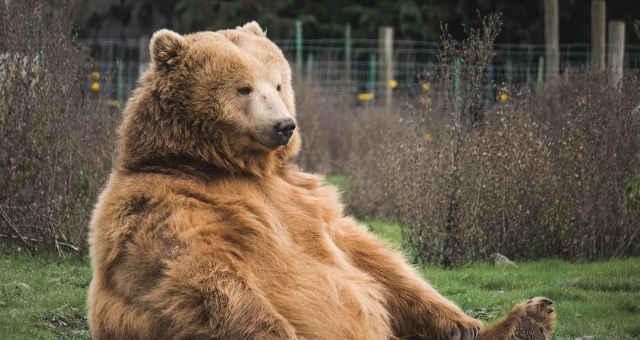 urso bear market mercado de baixa