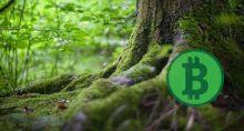 taproot raíz bitcoin protocolo