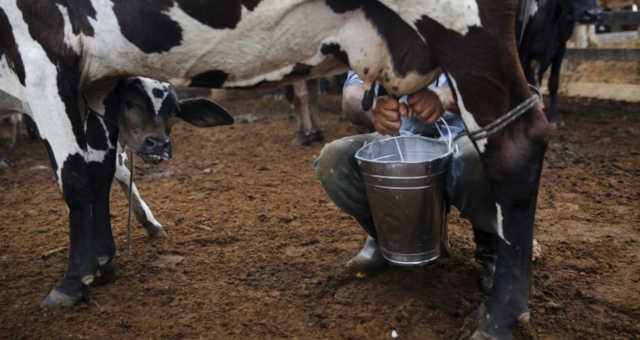 Agronegócio-Vaca-Leite
