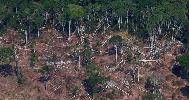 Amazônia Florestas