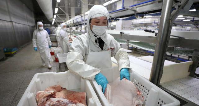 Suínos carne china