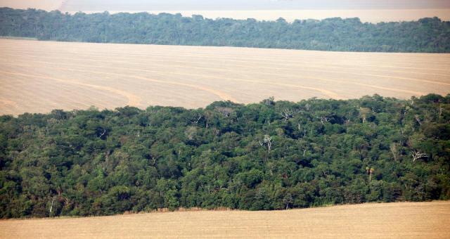 Meio Ambiente Amazônia Desmatamento Agronegócio