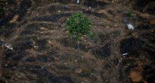 Meio ambiente desmatamento