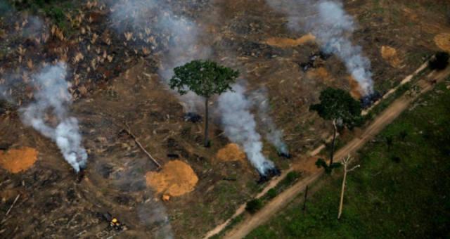 Desmatamento Amazônia Meio Ambiente