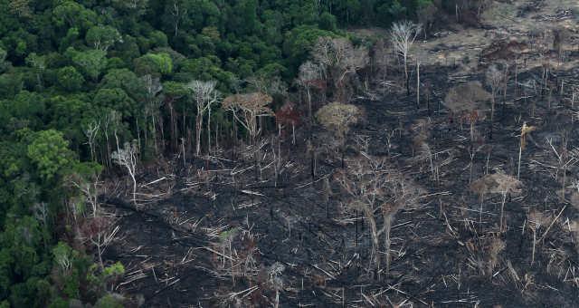Amazonas, Floresta