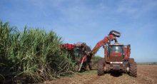 Colheita de cana de açúcar na São Martinho
