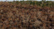 Desmatamento Meio ambiente amazônia