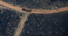 Meio ambiente Amazônia Desmatamento
