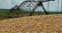 Safras Grãos Milho Agronegócio Agricultura