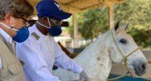 Vacina Cavalo Coronavírus