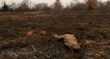 Pantanal Meio Ambiente Desmatamento Queimadas