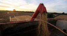 Soja Grãos Commodities Agricultura Agronegócio