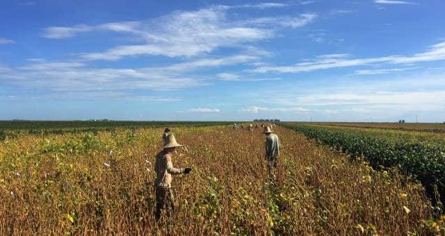 Soja Grãos Agricultura Agronegócio Commodities