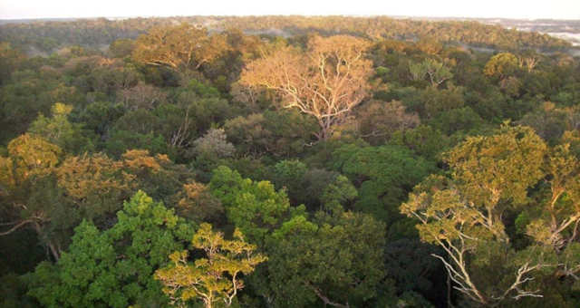Amazônia Meio Ambiente 7