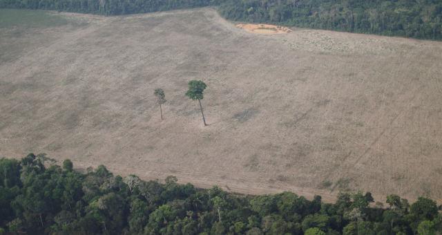 Desmatamento Amazonas