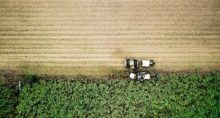 Cana-de-açúcar Agronegócio Agricultura