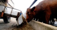 Boi Carnes Agropecuária Agronegócio