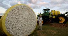 Algodão Agronegócio Commodities