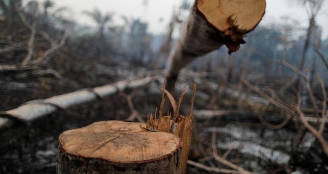 Amazônia atingido por queimada