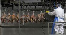 Carne de frango em Itatinga