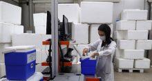 Armazenamento de vacinas contra Covid-19 em caixas térmicas doadas pela Ambev