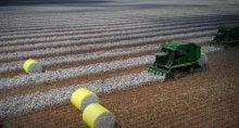 Agricultura, Agronegócio, Algodão, SLC Agrícola
