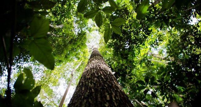 Floresta Meio Ambiente