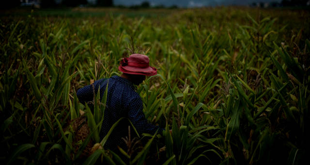 Lavoura de milho China
