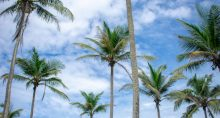 Tropical Palmeiras Meio Ambiente