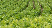 Agricultura Plantação