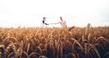 Trigo Grãos Agricultura