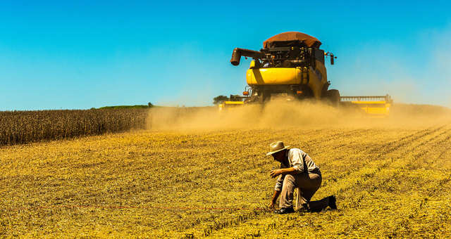Soja Grãos Agricultura