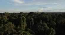 amazonas Amazônia