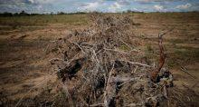 desflorestamento em Palmeirante, em Tocantins