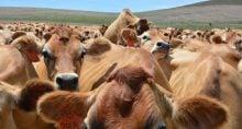 Boi Carnes Commodities Agronegócio Pecuária