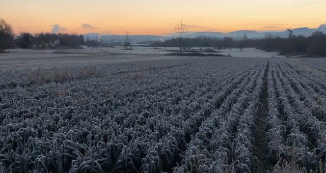 Geada Gelo Plantação